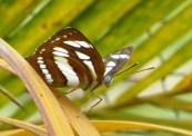 161221-cambodia-common-mime-2