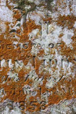 170105-st-just-churchyard-lichens-5
