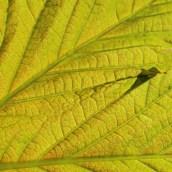 170305-yellow-10