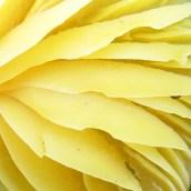 170305-yellow-6