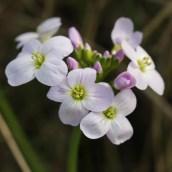 170407 spring flowers (5)