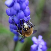 170407 spring flowers (9)