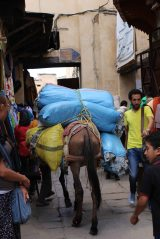 170412 Moroccan donkeys horses mules (4)