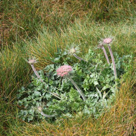 170521 7 Seaford Head Flower