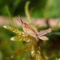 170531 7 grasshopper