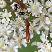 170630 8 Stilt bug