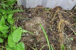 170703 Vole nest under refugia