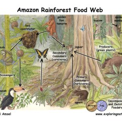 Freshwater Biomes Food Chain Diagram 2007 Ford F150 Remote Start Wiring Tropical (rainforest) | Of Planet Earth
