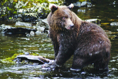 Bear Anan Creek USFS 400x267 Saving the Tongass National Forest