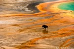 W FelixGilDeLaCasa Yellowstone 1 150x100 EarthTalk Radio