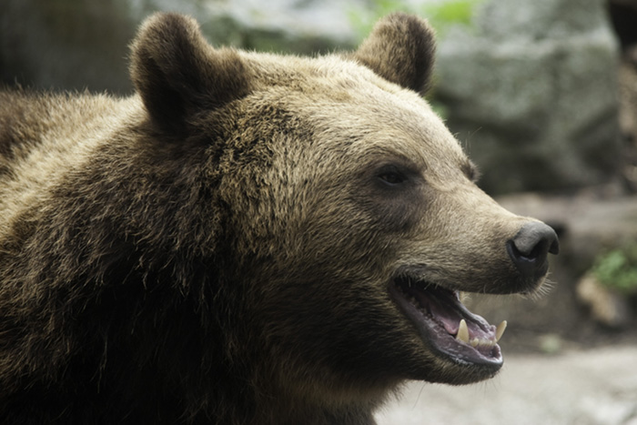brown bear Earthtalk Q&A