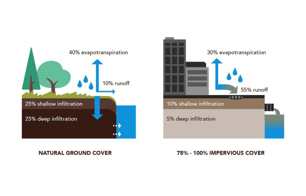medium resolution of a rain garden imitates nature