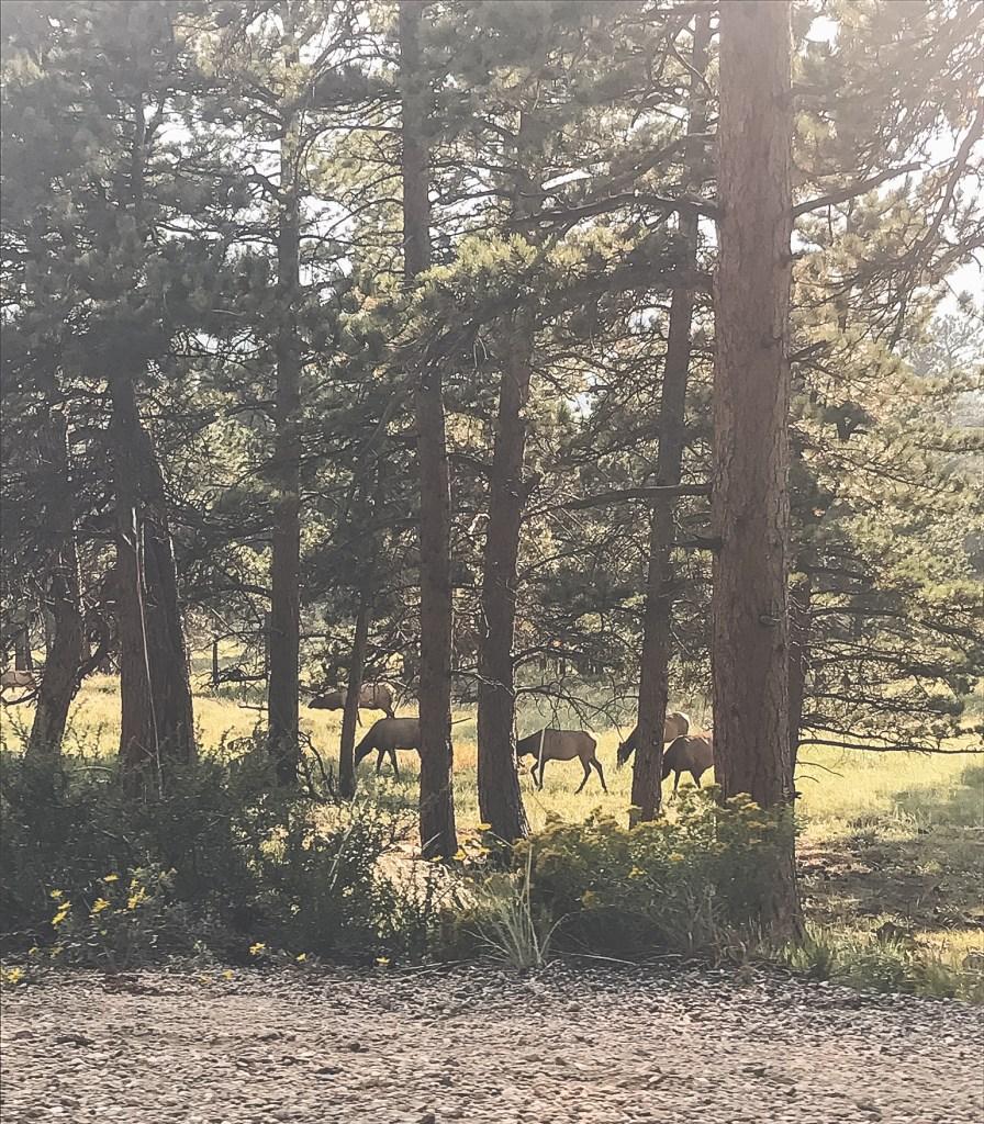 wildlife at bear lake Rocky Mountain National Park