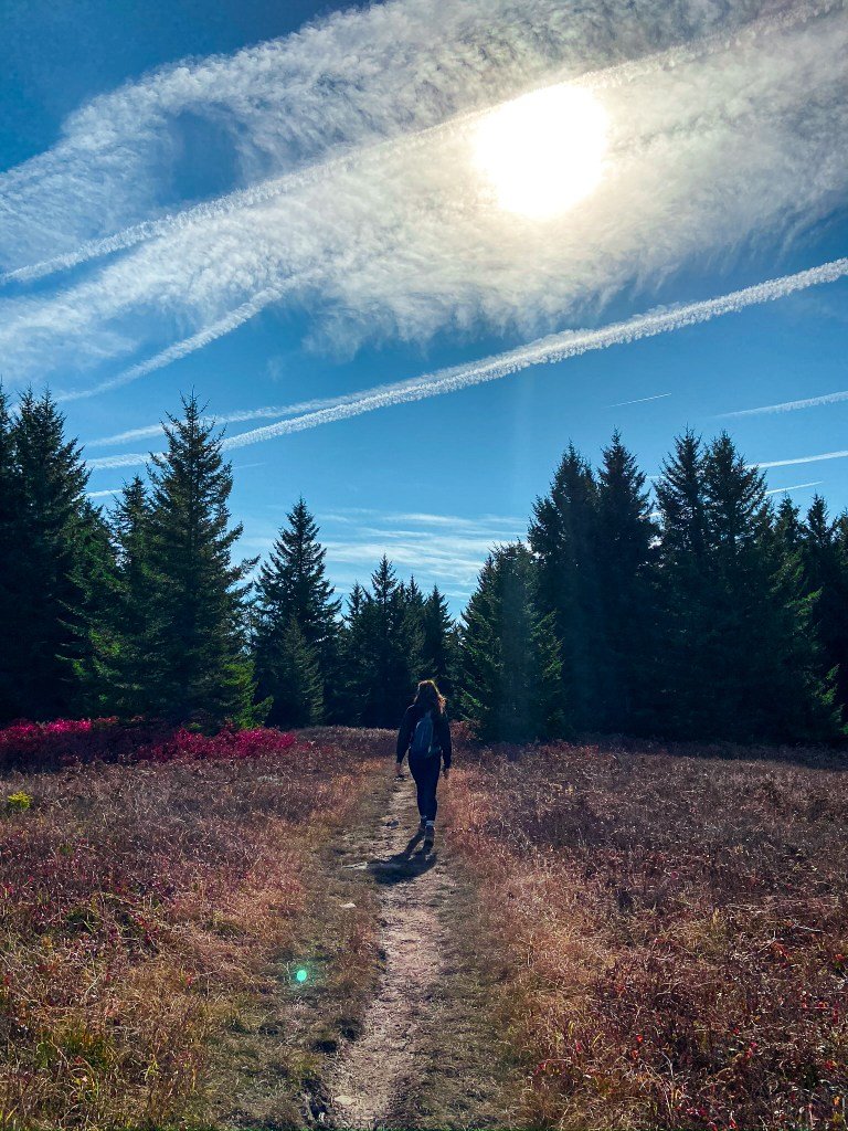 Dolly Sods WV trail through trees