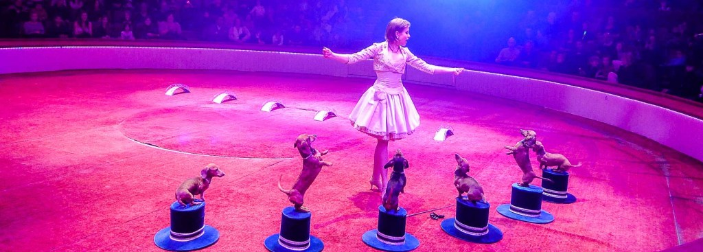 Trainer with dachshunds on pedestals at the Paris circus.