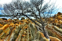 Batu Batik, Motif yang Terukir Jutaan Tahun