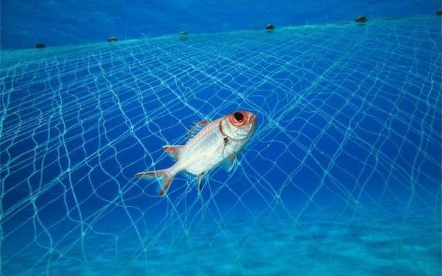 Endangered Wildlife  Endangered Marine Species
