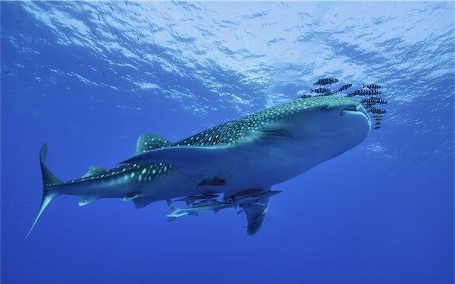 Endangered Marine Species  Endangered Wildlife