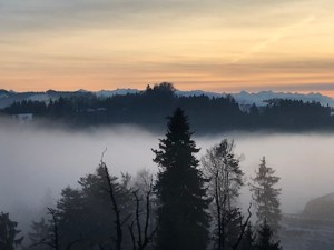 IMG_3762 fog line