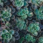 Why We Love Succulent Arrangements Earth Within Flowers