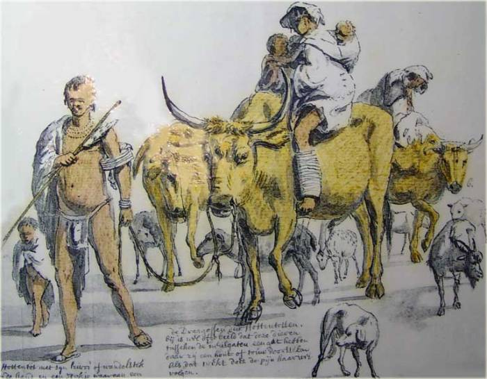 Khoi cattle and sheep