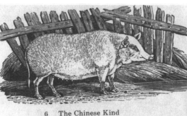 The Chinese Kind