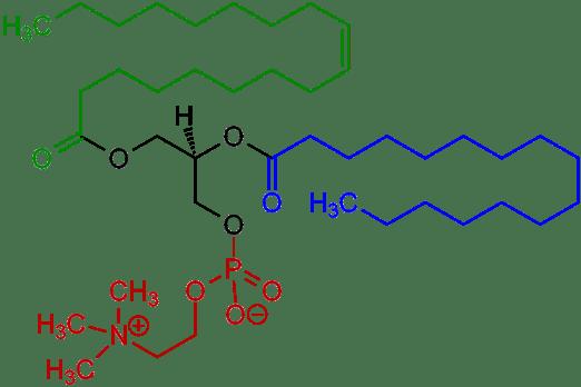 1-Oleoyl-2-almitoyl-phosphatidylcholine_Structural_Formulae_V.1