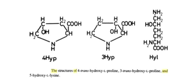 hydroxyproline and hydroxylysine