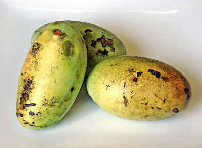 Fresh Pawpaws