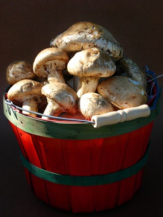 Matsutake in Red Basket