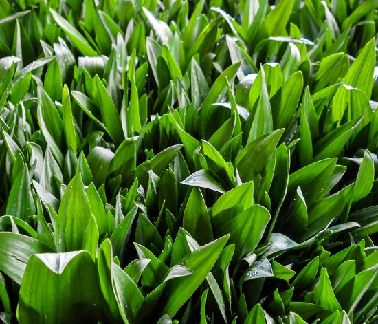 Masses of Fresh Ramps