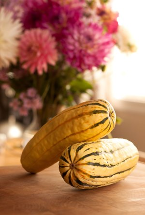 Delicata squashes at rest