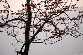 Wild trees on way from Pheuntsholing to Thimpu. Taken from moving car