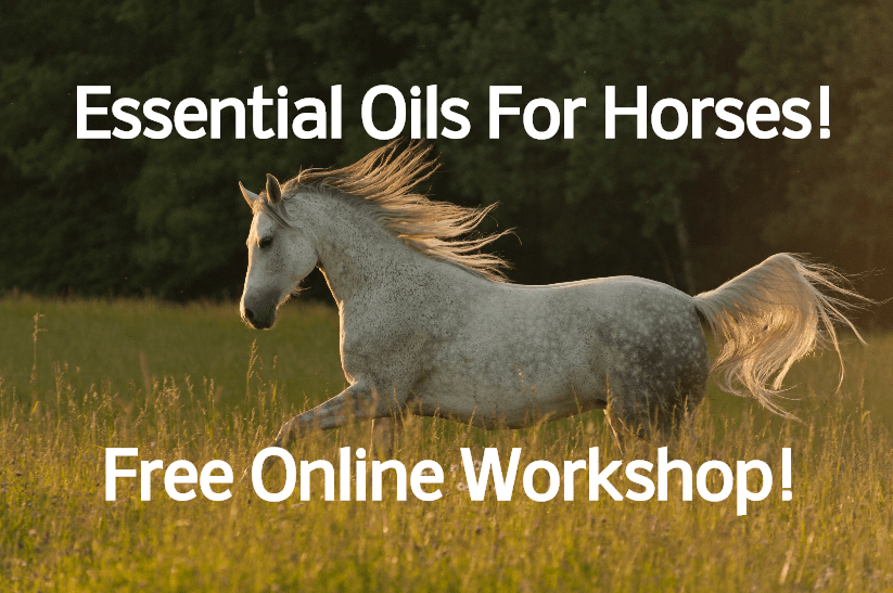 Learn To Use Essential Oils With Horses!