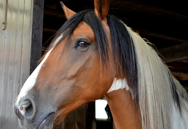 How to SAFELY use essential oils with Horses and Pets!