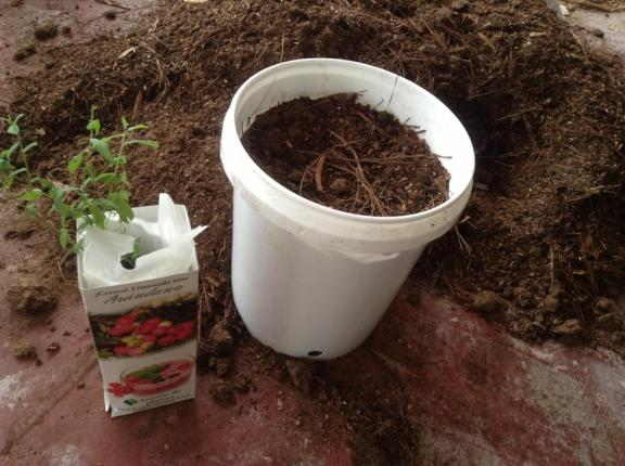 Fill the bucket with soil