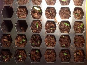How to keep your seedlings thriving until the weather cooperates