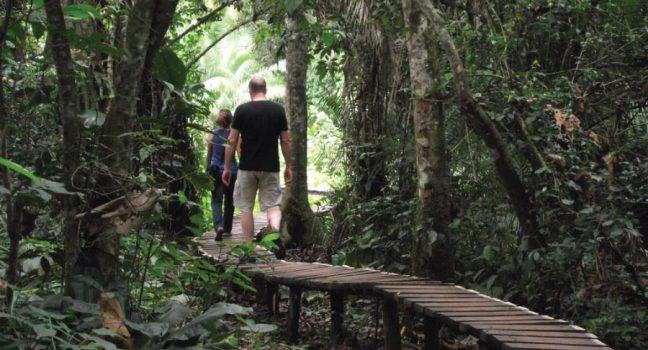 Kibale Forest National Park Walk - Chimpanzee Trekking Uganda Safari