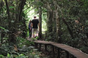 Kibale Forest National Park Walk - Chimpanzee Trekking Uganda Safari