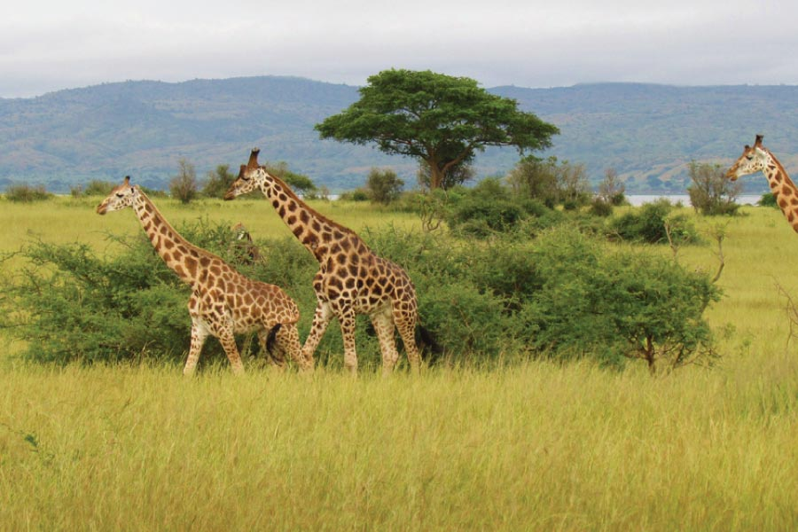 Murchison Falls National Park, Uganda Safari - Big Five Safari