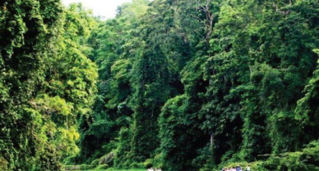 Katonga Wildlife Reserve