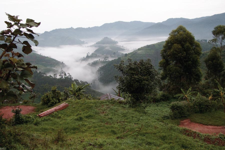 Bwindi's Impenetrable Forest National Park