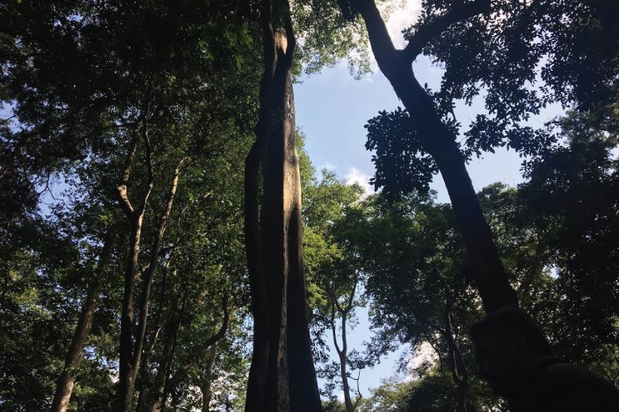 Mpanga Forest Reserve