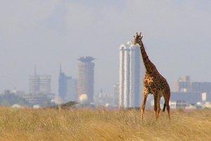 Nairobi National Park tour - Kenya Safari