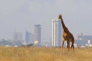 Nairobi National Park Tour