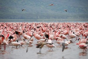 Lake Nakuru Safari