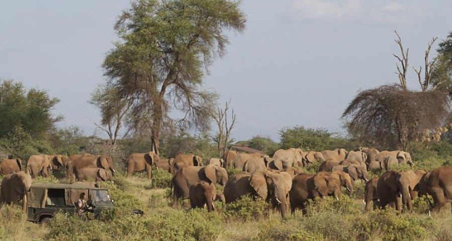 Samburu National Reserve Safari