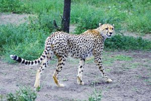 Serengeti National Park camping Safari