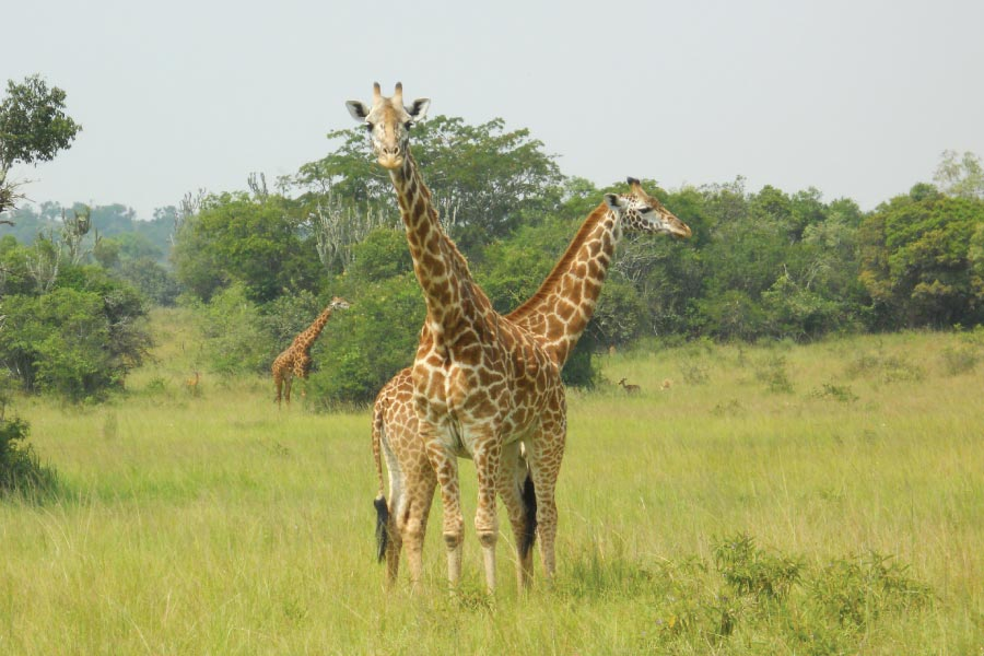 Akagera National Park Safari