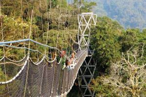 3 Days Nyungwe Forest Chimpanzees Tour